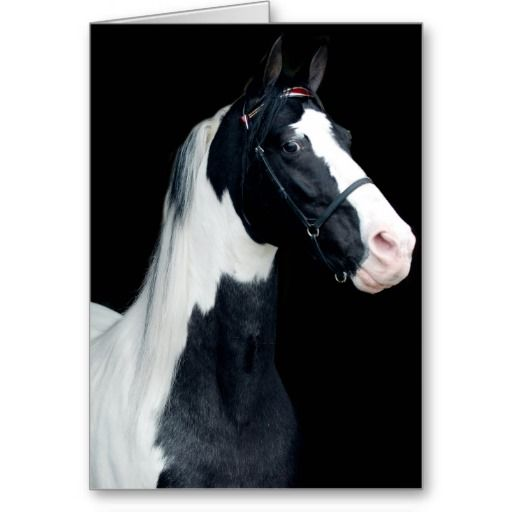 Free Horse Printable Horse Birthday Cards With Sayings Funny Horse