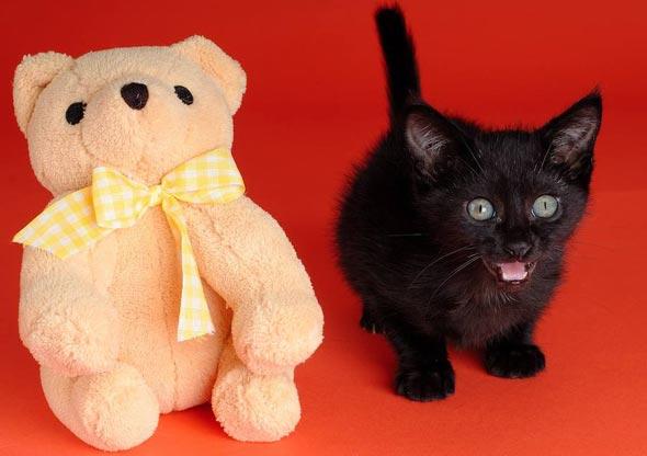 Good Morning Kitten Pixel 5 March 17 2020 In 2020 Kittens