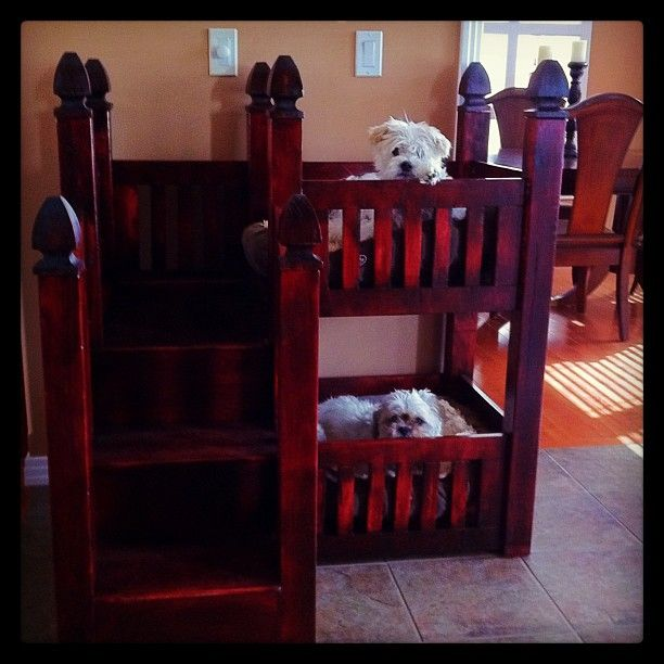 Best Totally Getting A Dog Bunk Bed For My Dogs Diy Dog Bed 400 x 300