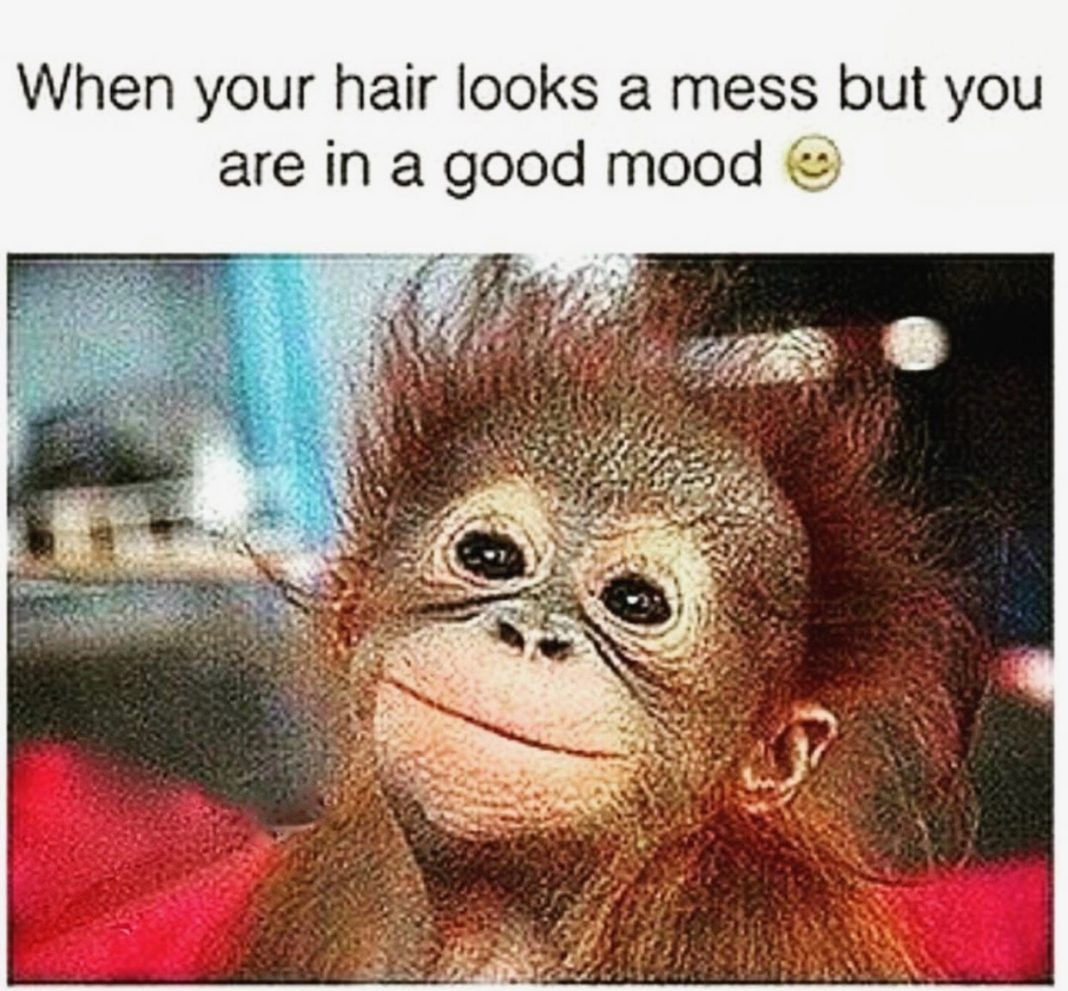 30 Bad Hair Day Memes For You To Comb Over Part 2 Monkey Memes Bones Funny Funny Animals