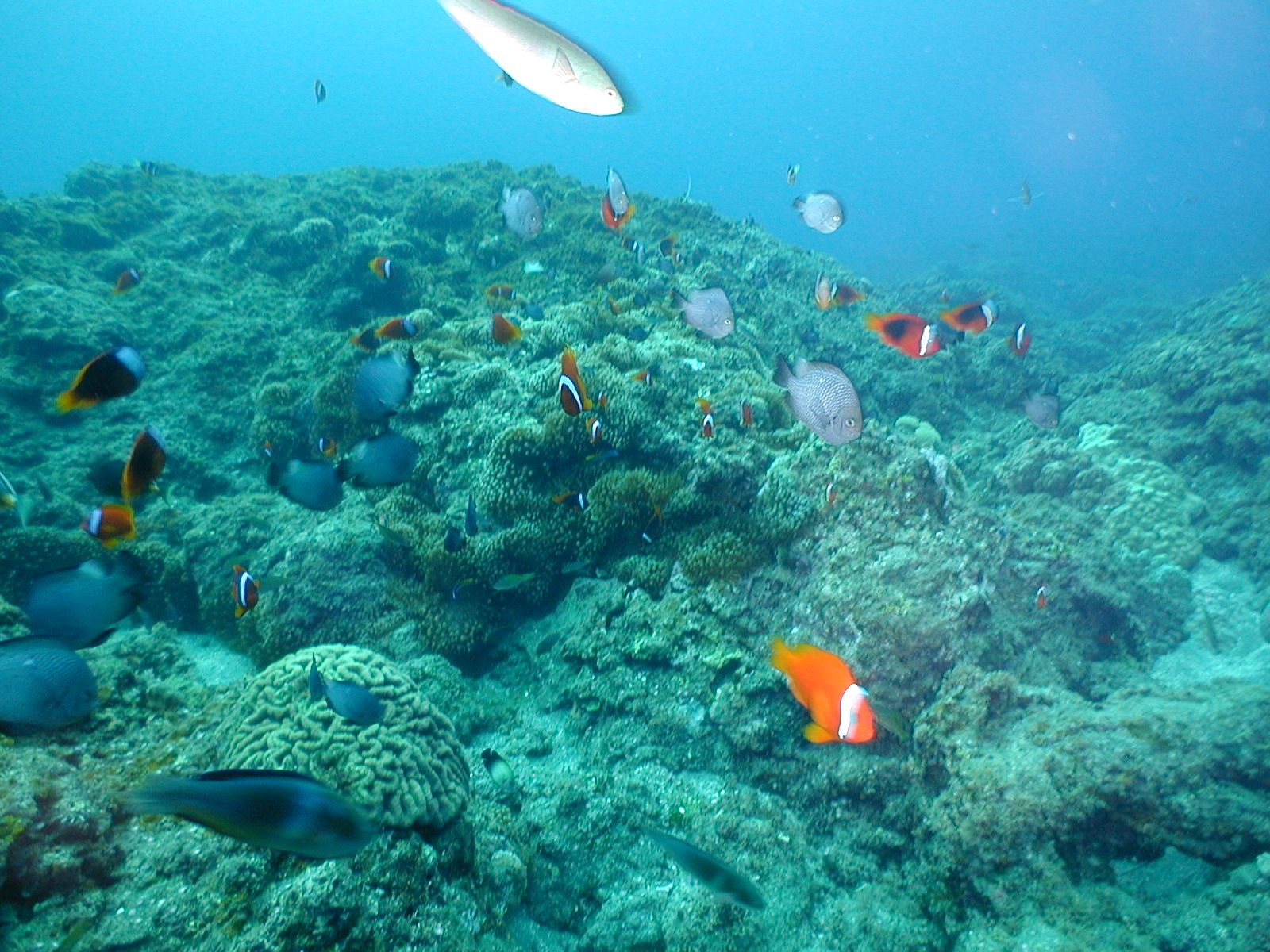 Sea organism and fish in diving
