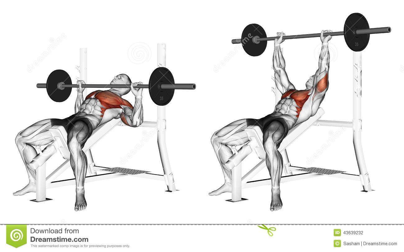 Bench Dips Workout Part - 34: Exercises · Bench Dip ...