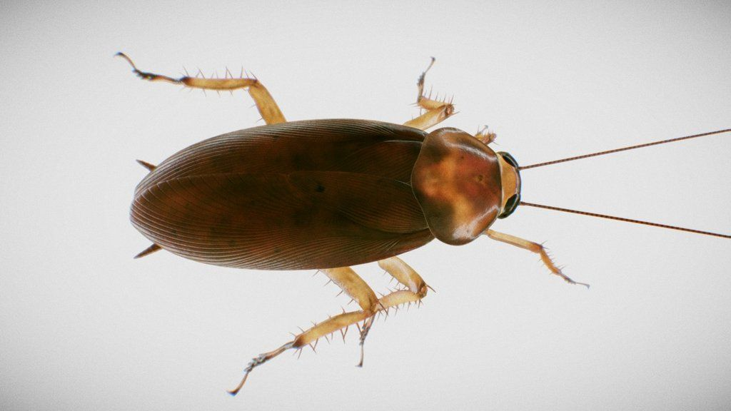 Aminated 3d model of an american cockroach via rstr_tv on