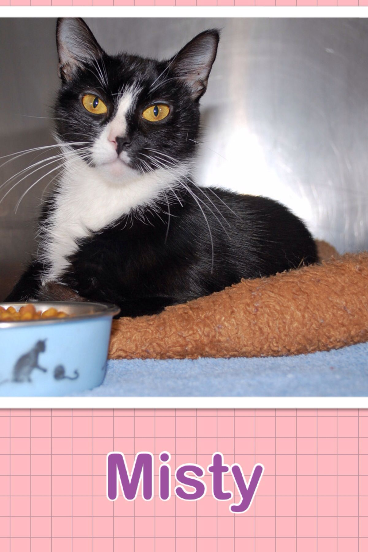 Misty, Available for Adoption. She is an Adultfemale who
