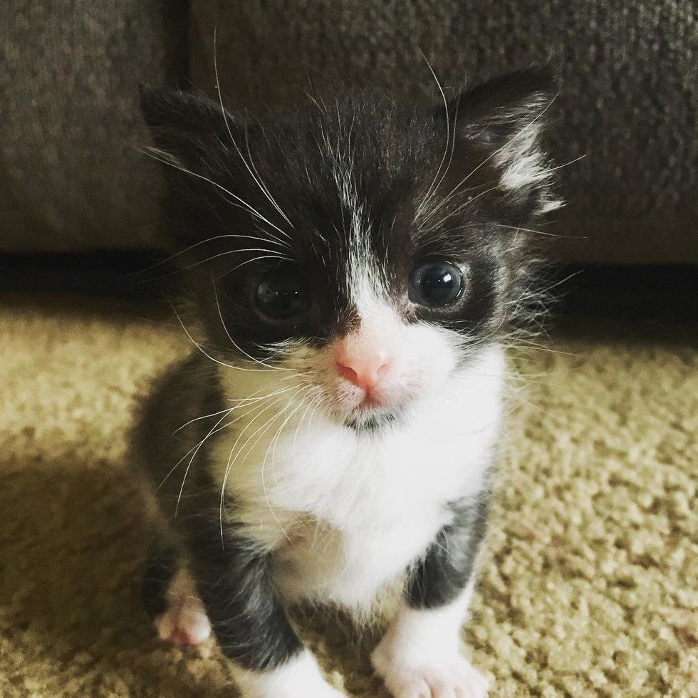 Runty Kitten Born And Abandoned In A Car Finds Someone To Love And Snuggle Kitten Snuggles Animal Stories