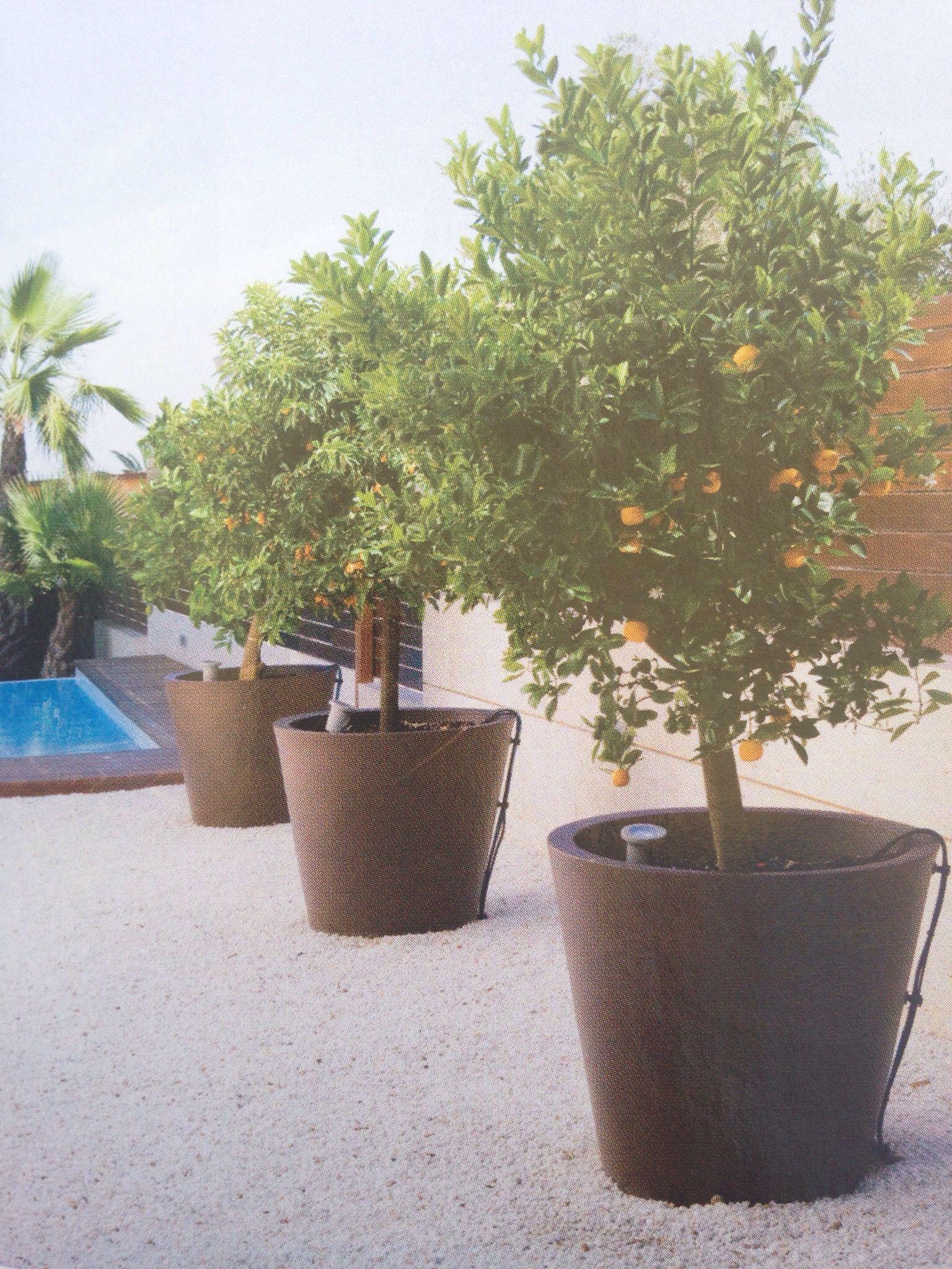 Macetas con rboles frutales para una terraza terraza for Cultivo de arboles frutales en macetas