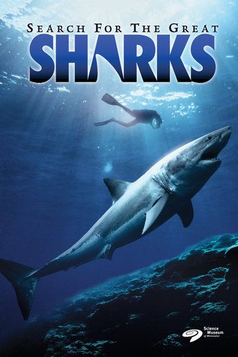 Search for the Great Sharks (IMAX) - Mal Wolfe | Documentary.