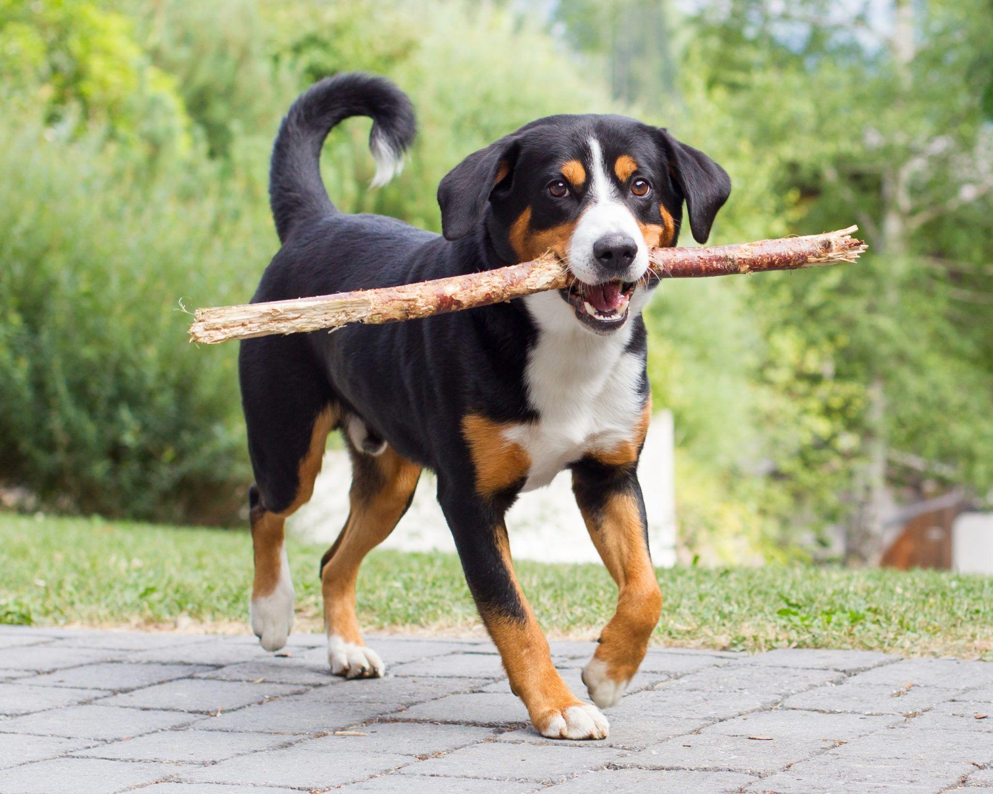 Pin Auf Hund