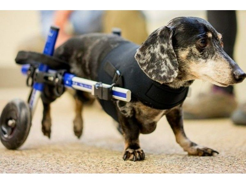 Try Not to Cry with Joy Watching This Paralyzed Nashua Dog