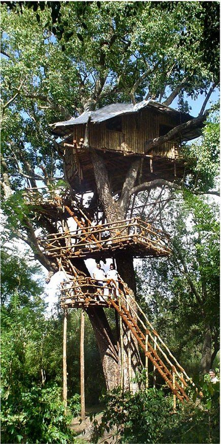 now THIS is a tree house hotel - also has hot/cold running water and toilets.