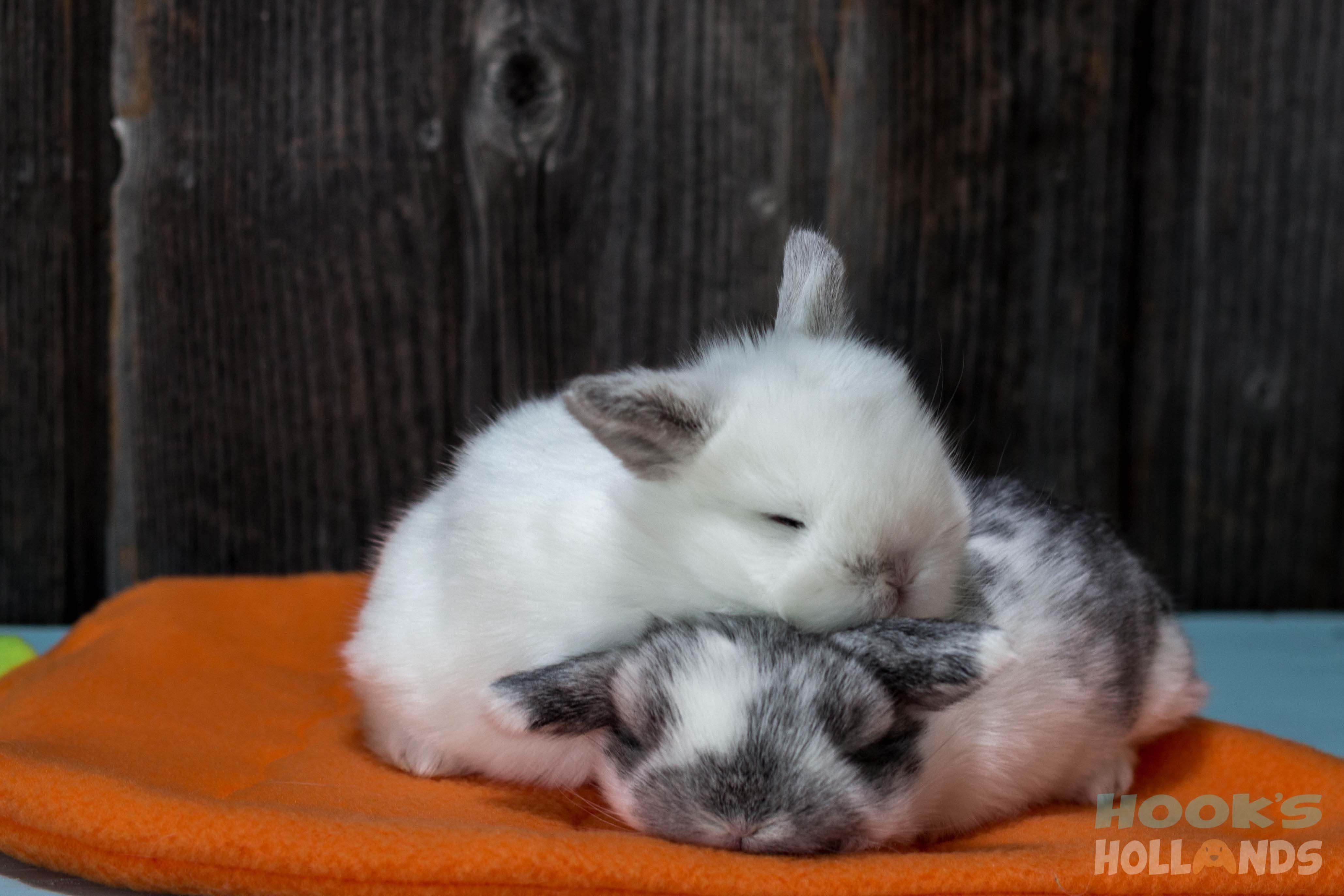 Bunnys Snow Bunny Hook
