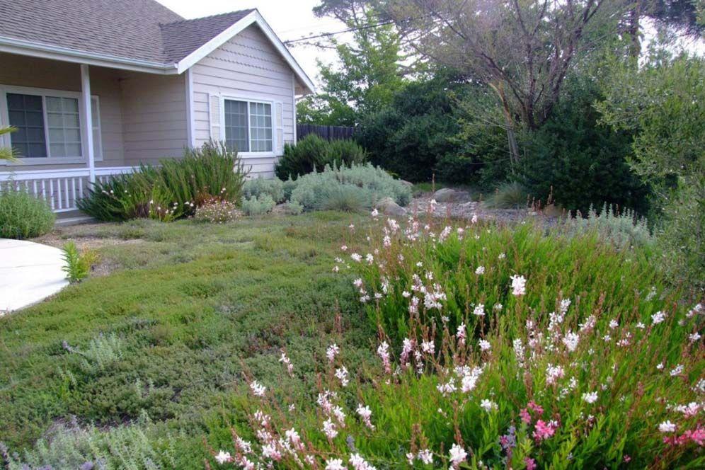 Meadow Front Yard