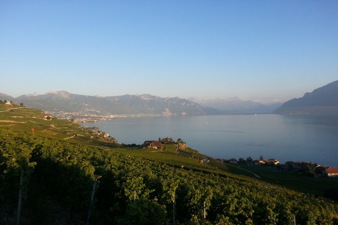 #Switzerland has a lot to offer to its visitors: great landscapes, sports activities and of course its fresh air! Enjoy this amazing view of #Lavaux in the canton of Vaud! #WeAreESL