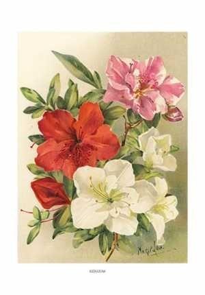 Botanical art print of Azaleas