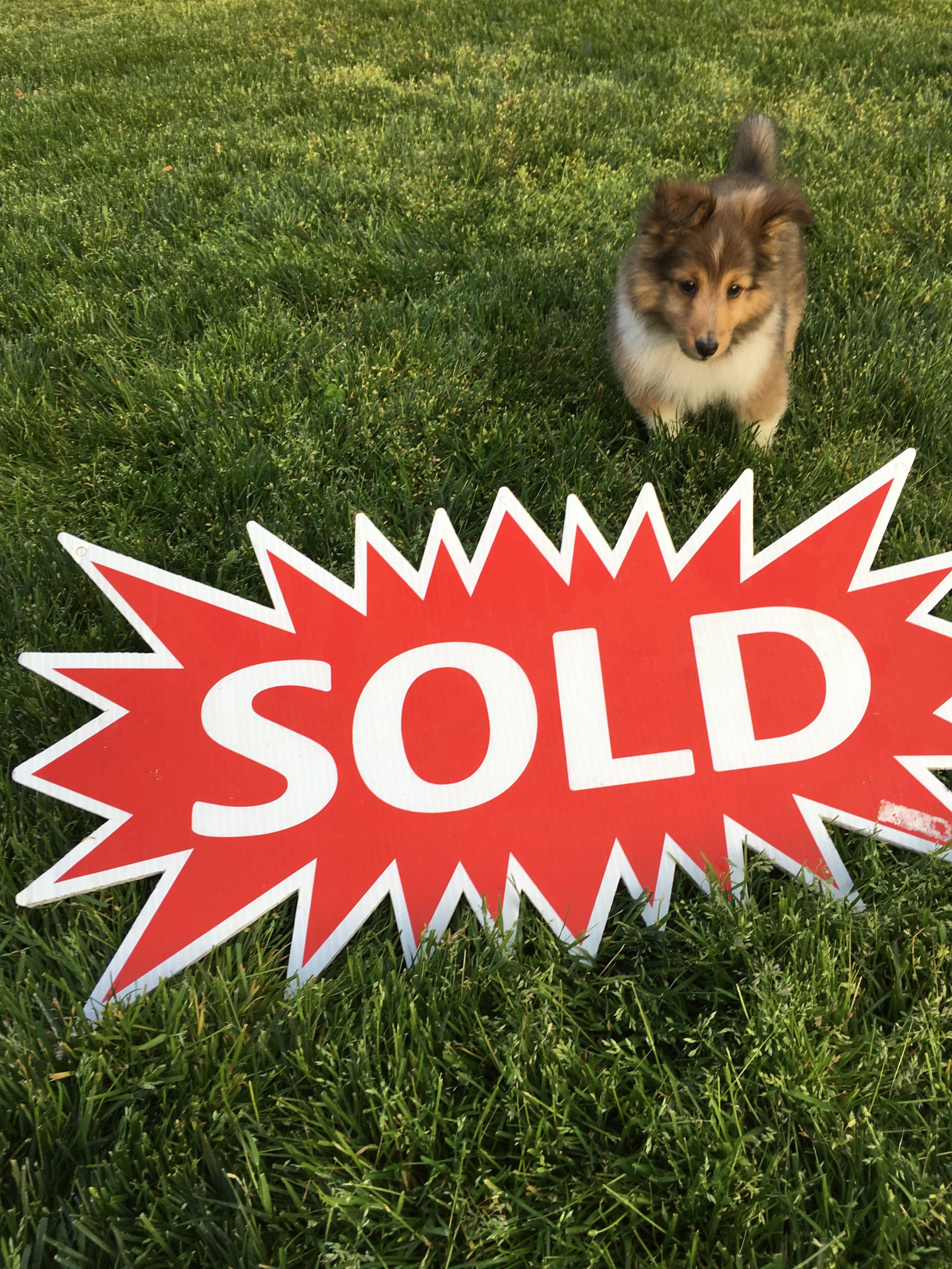 """When you buy with us you don't get """"Champ"""" but you will feel like one...  #carleenwallsrealtor"""