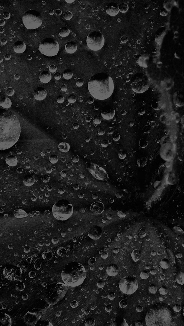Water Drop On Leaf Summer Dark Bw Live Black Iphone 5s Wallpaper Download Iphone Wallpapers Ipad Wallpapers Iphone 5s Wallpaper Water Drop On Leaf Wallpaper Black water droplets wallpapers for