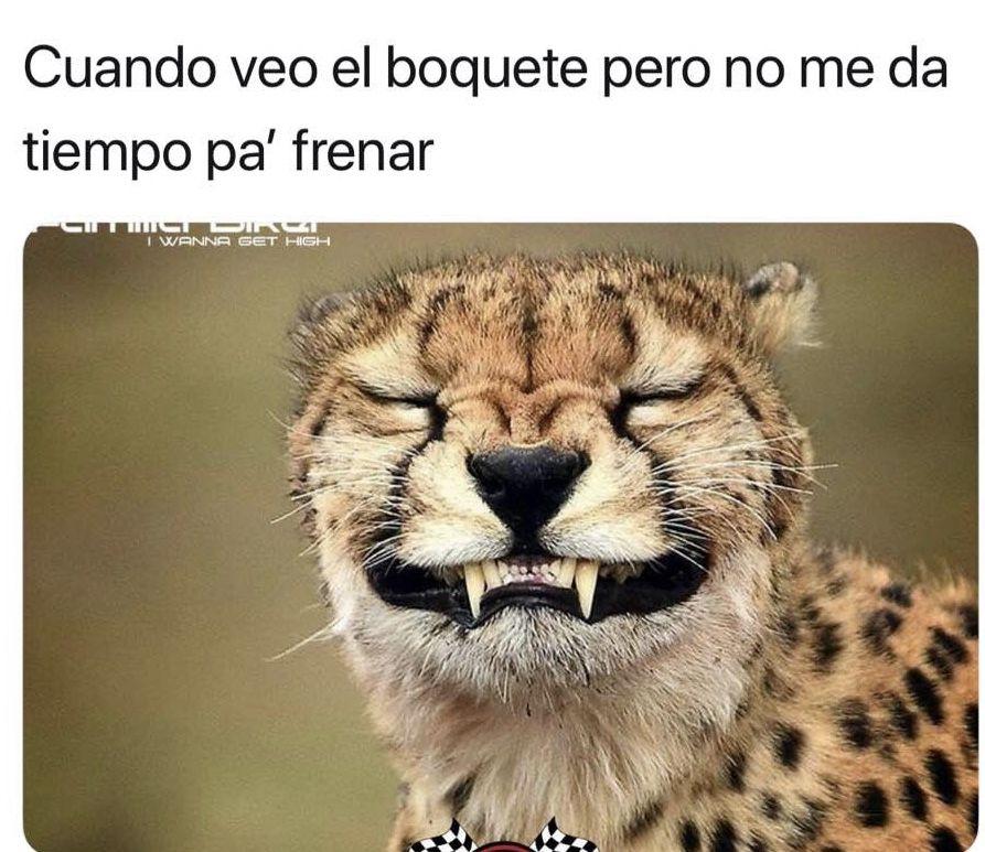 Jajajaja Funny animal faces, Memes funny faces, Animal faces