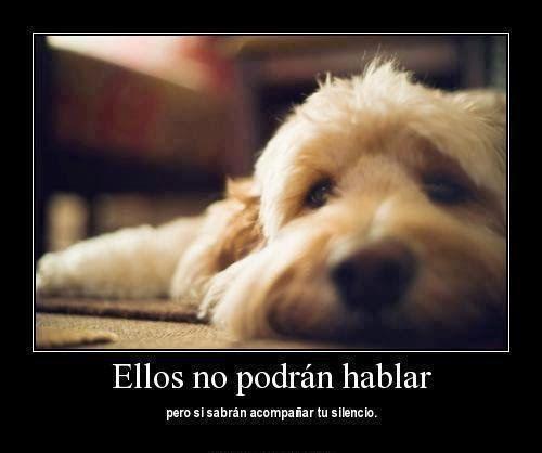 Frases De Amor Por Los Animales El Mejor Blog De Mascotas Otros