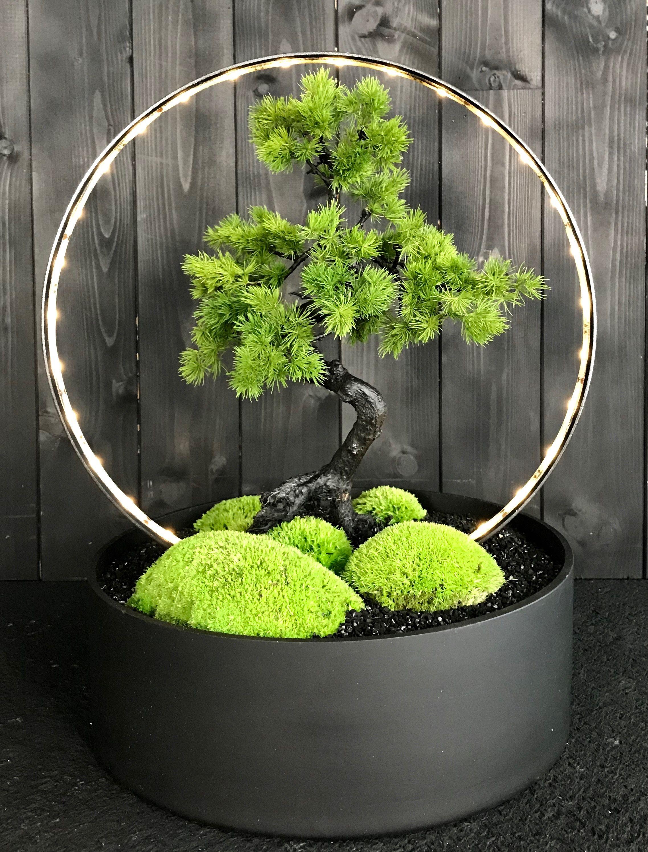 Bonsai Lighting Feature By Donaldo Radovich
