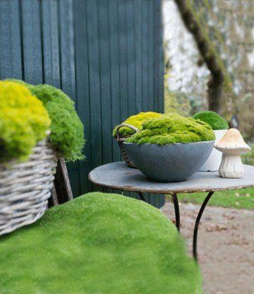 Moos u0027Forest Green®u0027 garten Pinterest Moos, Schattengarten - pflanzgefase aus moos