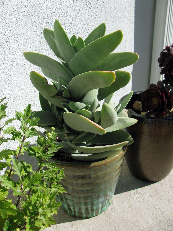 My Succulent Garden Avec Images Succulentes Plante