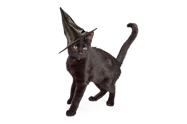 In honor of Halloween, we shine a light on some of the spookiest cat superstitions — and why they're all simply untrue.