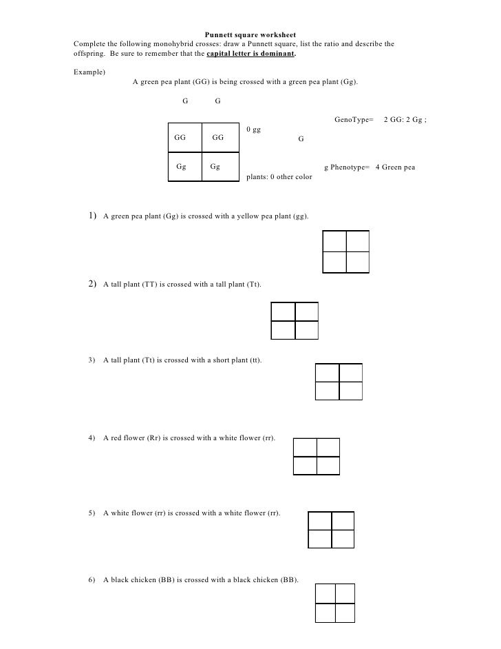 Punnett Square Worksheet by kpolson via slideshare – Genetics Practice Problems Worksheet Answer Key