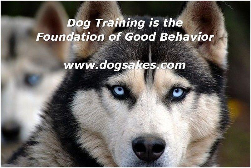 Interactive Dog Toys Dog Depression Is Real - Dog Sakes
