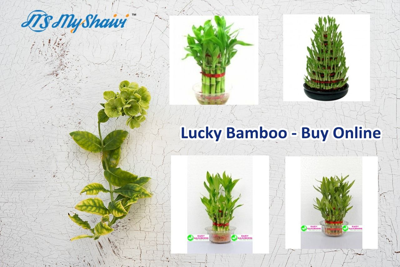 Succulents Plants Nursery