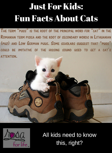 Just For Kids Fun Facts About Cats Cat facts, Fun facts