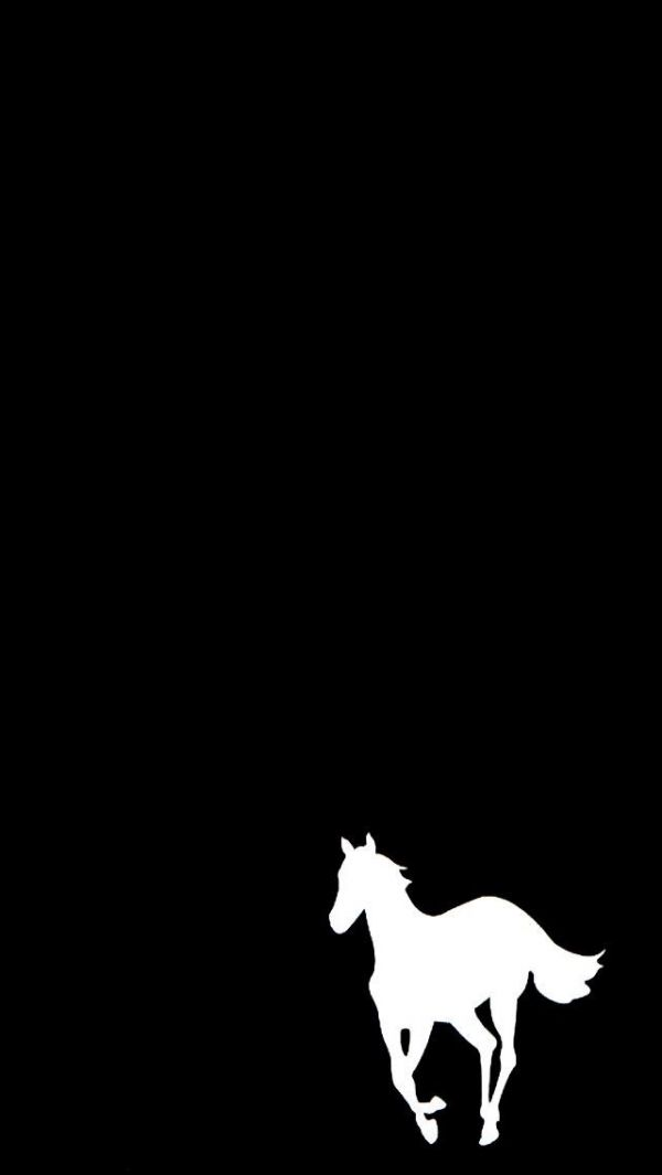 White Pony Hee Hee Horse Wallpaper Horse Background