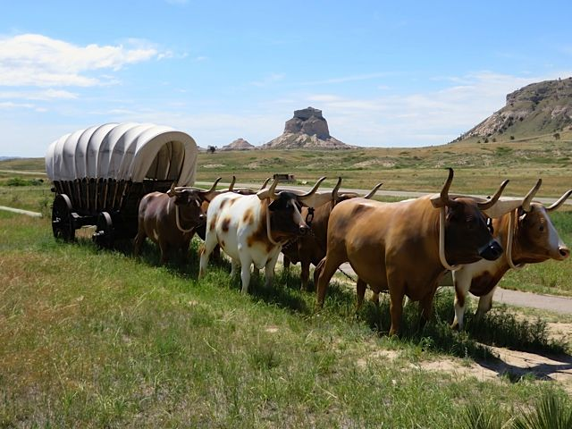 Animals Pulling Wagon : How big were the oxen pulling a wagon yahoo image search