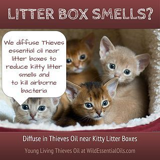 Diffuse Thieves Or Purification Essential Oils Near Litter Boxes