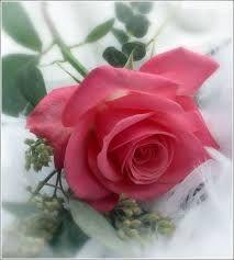 Flores Bonitas Flores Rosas Amor Flores