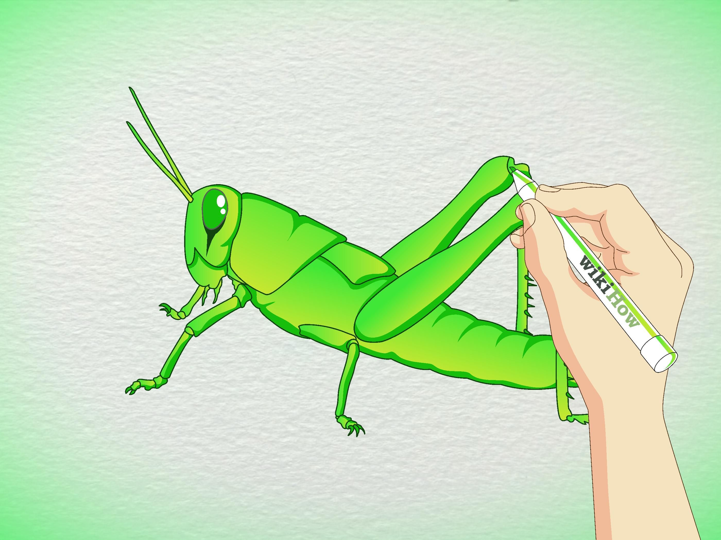 Image Result For Total Health Idaho Grasshopper Drawing