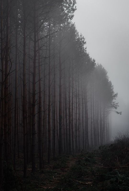 http://dennybitte.tumblr.com/post/118564439595/misty-woods-by-denny-bitte