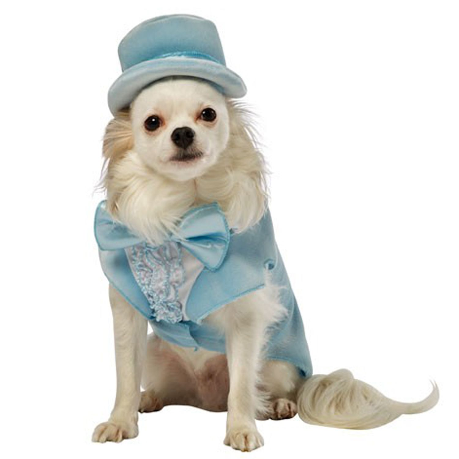 Dog Clothes. Pet Halloween CostumesSpirit ...  sc 1 st  Pinterest & Dumb and Dumber Harry Tux Dog Costume - Blue at BaxterBoo ...