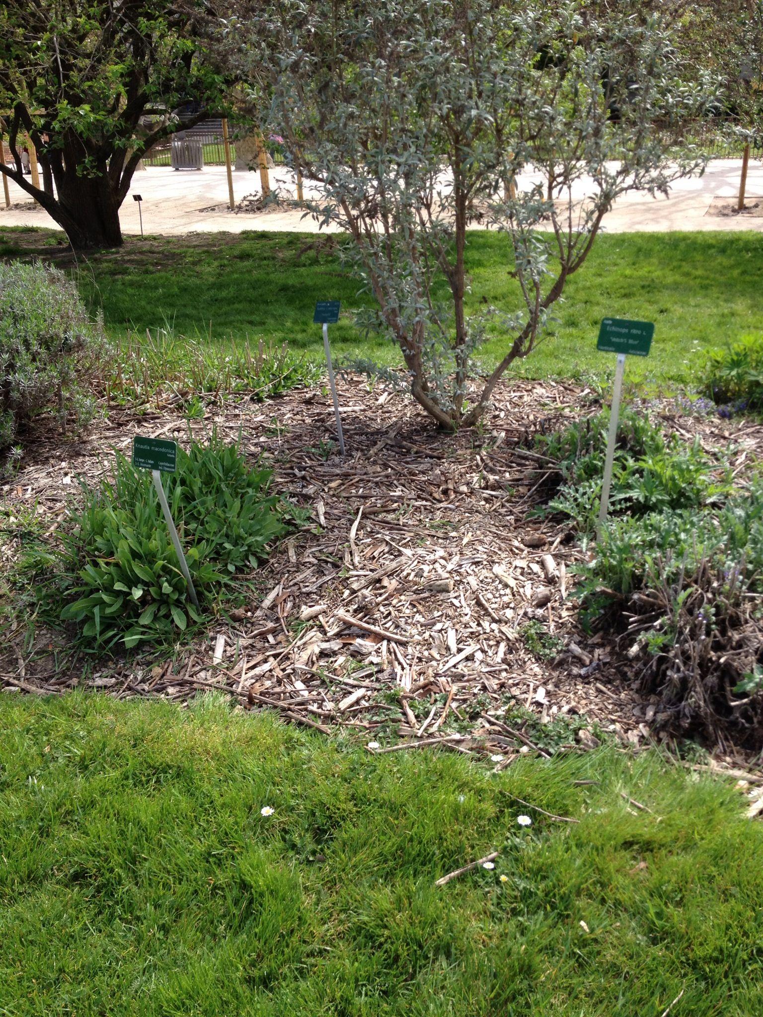 Paillage simple Jardin des plantes Paris