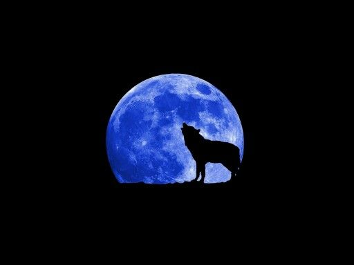Pin by Kimberly Smith on Wolfs | Blue moon, Wolf moon