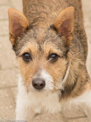 Hund, k.A. (Mischling, Hündin, 0,5 Jahre) in Tecklenburg