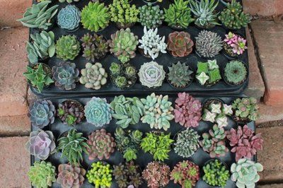 Photo of The Succulent Source