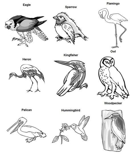 worksheet re: guessing what a bird eats based on its beak