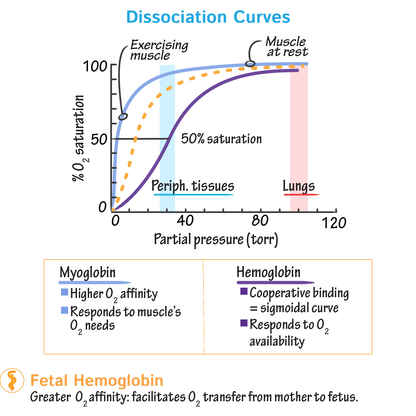 Dissociation Curves We Can Compare Compare The Binding Properties Of Both Myoglobin A In 2020 Biochemistry Medical Laboratory Science Human Anatomy And Physiology