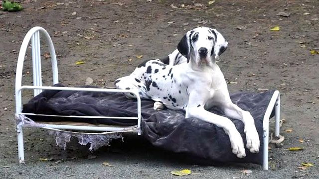 Why Do Pups In Service Training Share A Bed With A Person