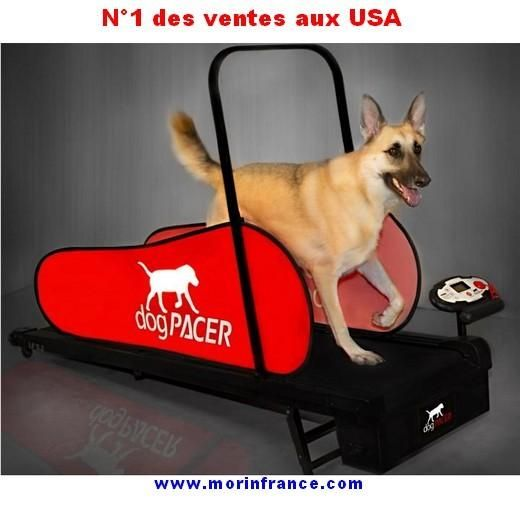 tapis roulant dog pacer home trainer