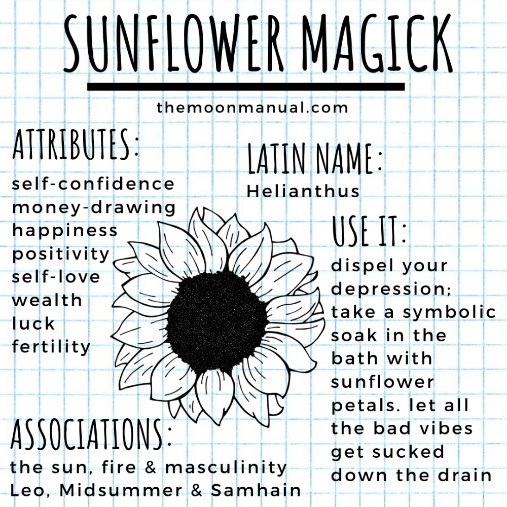 The Green Witch Diaries - Sunflower