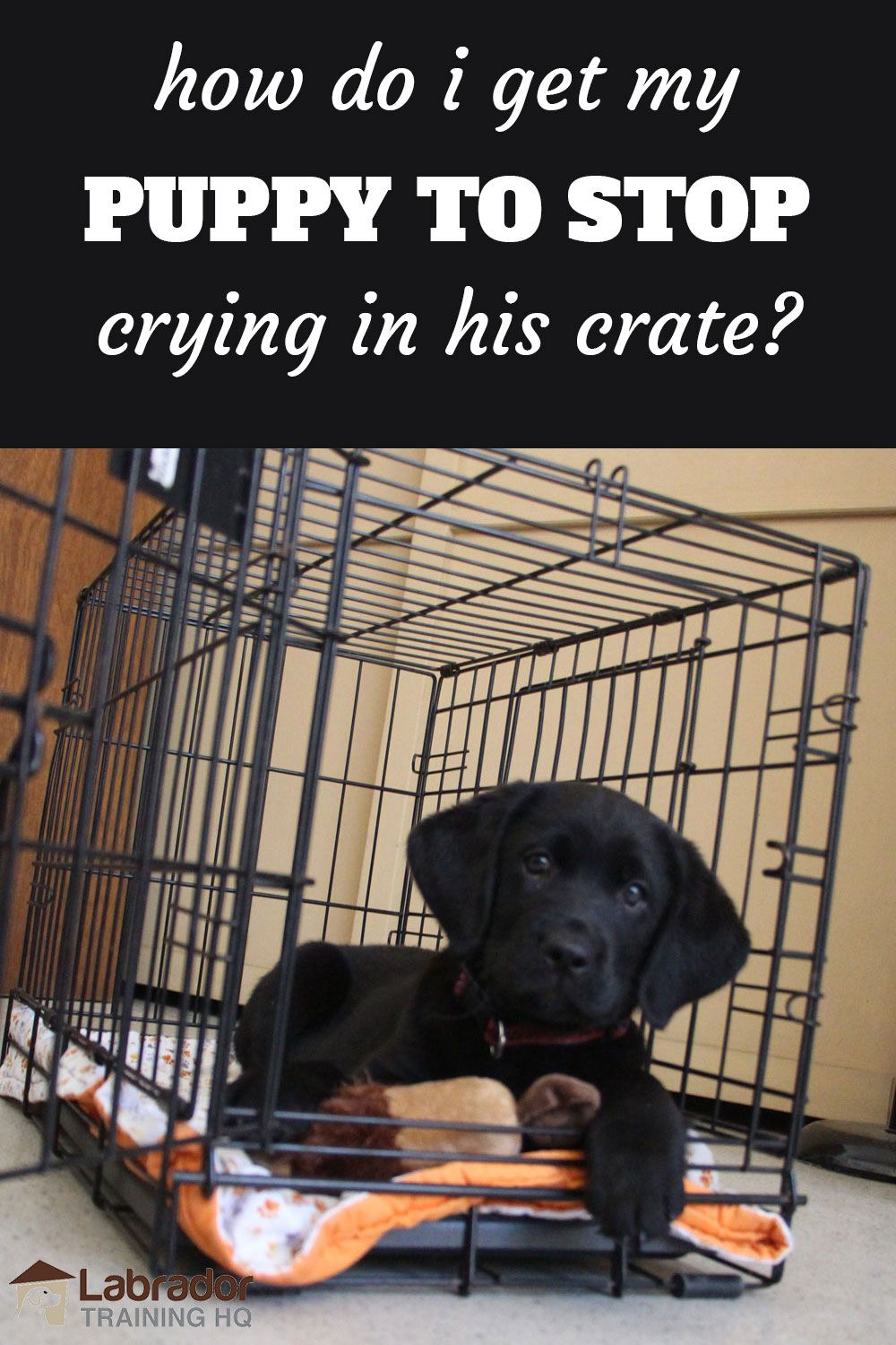 How Do I Get My Puppy To Stop Crying In His Crate At Night Dog Crying Crate Training Puppy Puppies