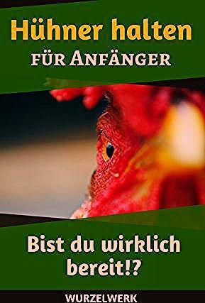Hühner halten für Anfänger: Passen Hühner zu deinem Alltag?