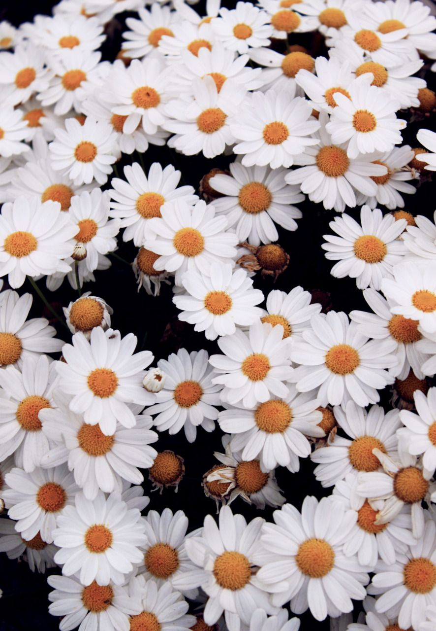 An entry from note to self flowers yards and flower an entry from note to self daisy flowerssunflowerslittle dhlflorist Image collections