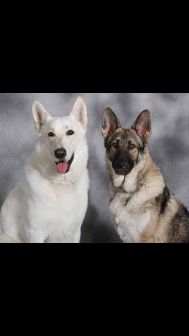 Nikko & Roscoe... Father & Son